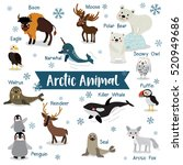 arctic animals cartoon on white ... | Shutterstock .eps vector #520949686