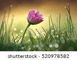 Beautiful Flower Pink Daisy...