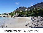 african penguins standing  on... | Shutterstock . vector #520994392