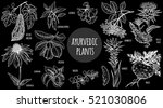 Medical Plants Isolated White...