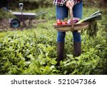 Cultivate Garden Nature...