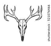 stylized deer skull sketch hand ... | Shutterstock .eps vector #521076466