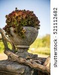 succulent plant in stone pot | Shutterstock . vector #521112682