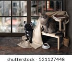 Stock photo comfortable room with panoramic window dog and cat sitting at the ladder book cup of coffee 521127448