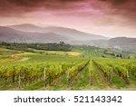 vineyard in tuscany | Shutterstock . vector #521143342