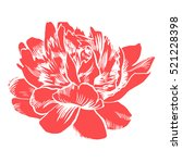 hand drawing peonies. vector... | Shutterstock .eps vector #521228398