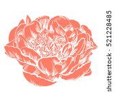 hand drawing peonies. vector... | Shutterstock .eps vector #521228485