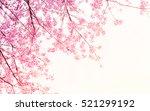soft blurred of sakura flower... | Shutterstock . vector #521299192