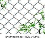 Barbed wire background with creeping ivy easy editable - stock vector