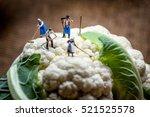 miniature farmers working in... | Shutterstock . vector #521525578