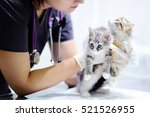 young female veterinary doctor... | Shutterstock . vector #521526955