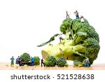 farmers harvesting broccoli... | Shutterstock . vector #521528638