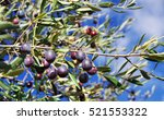 Ripe Olives On The Branch Of A...