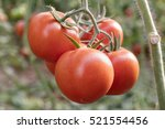 Close Up Of Fresh Red Tomatoes...