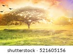 nature background concept ... | Shutterstock . vector #521605156