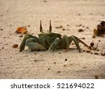 little crab sitting on the beach | Shutterstock . vector #521694022