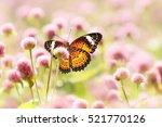 Butterfly  Flowers   Globe...