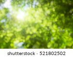natural green leaves white... | Shutterstock . vector #521802502