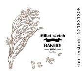 millet sketch. hand drawn...   Shutterstock .eps vector #521831308