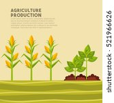 harvest of corn and plants... | Shutterstock .eps vector #521966626