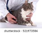 cat being examined at the vet... | Shutterstock . vector #521973586