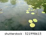 Small photo of Lotus flowers beautiful flowers growing in the water.