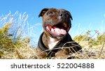 satisfied dog is laying between ...   Shutterstock . vector #522004888
