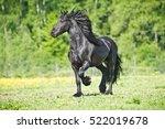 Black Friesian Horse Runs...