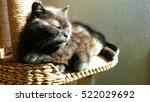 Grey Cat Relaxing In Sun On Ca...