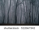 very dense fog in a forest