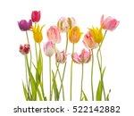 Bright Spring Variegated...