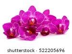 Orchid Flower Head Bouquet ...