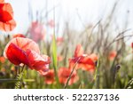 Filed Of Poppy Flowers  Close...