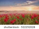 red poppy field over sunset ... | Shutterstock . vector #522252028