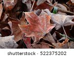 Frost Covered Leaves On The...