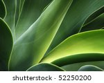 abstract cactus plant | Shutterstock . vector #52250200