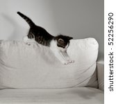 Stock photo young cat raves on white sofa 52256290