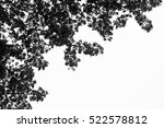 blurry tree in the forest... | Shutterstock . vector #522578812