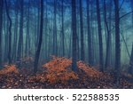 Magical foggy seasonal forest...