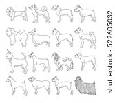 Set Of Purebred Dogs In Linear...