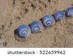 purple snails on the wet sea... | Shutterstock . vector #522659962