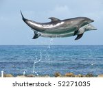 Two Bottlenose Dolphins ...