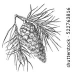 hand drawing pine cone on the... | Shutterstock .eps vector #522763816