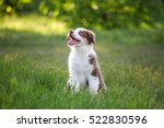 Cute Funny Little Puppy