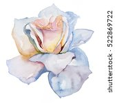 Stock photo white rose on a white background watercolor painting 522869722