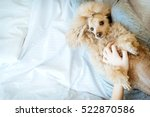 young woman with her dog  in a... | Shutterstock . vector #522870586