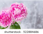 fresh  pink   peony flowers  on ... | Shutterstock . vector #522884686