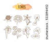 Hand Drawn Flower Set. Floral...