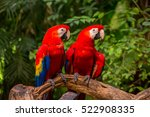 Two Parrots Friends Sit On The...