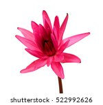 Stock photo beautiful water lily flower isolated on white background 522992626
